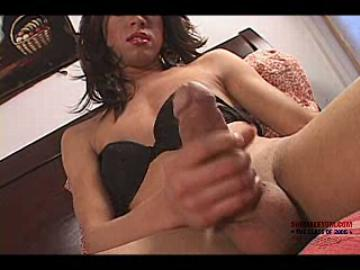 Free She Males Gallerys 18